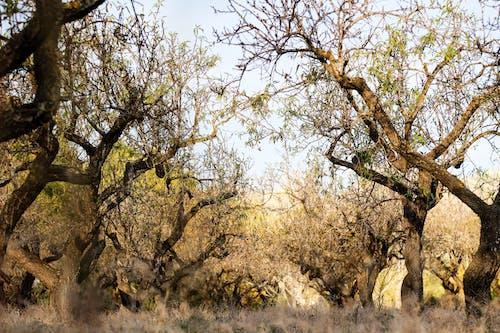 Fotobanka sbezplatnými fotkami na tému kmene, krajina, lesy, matka príroda