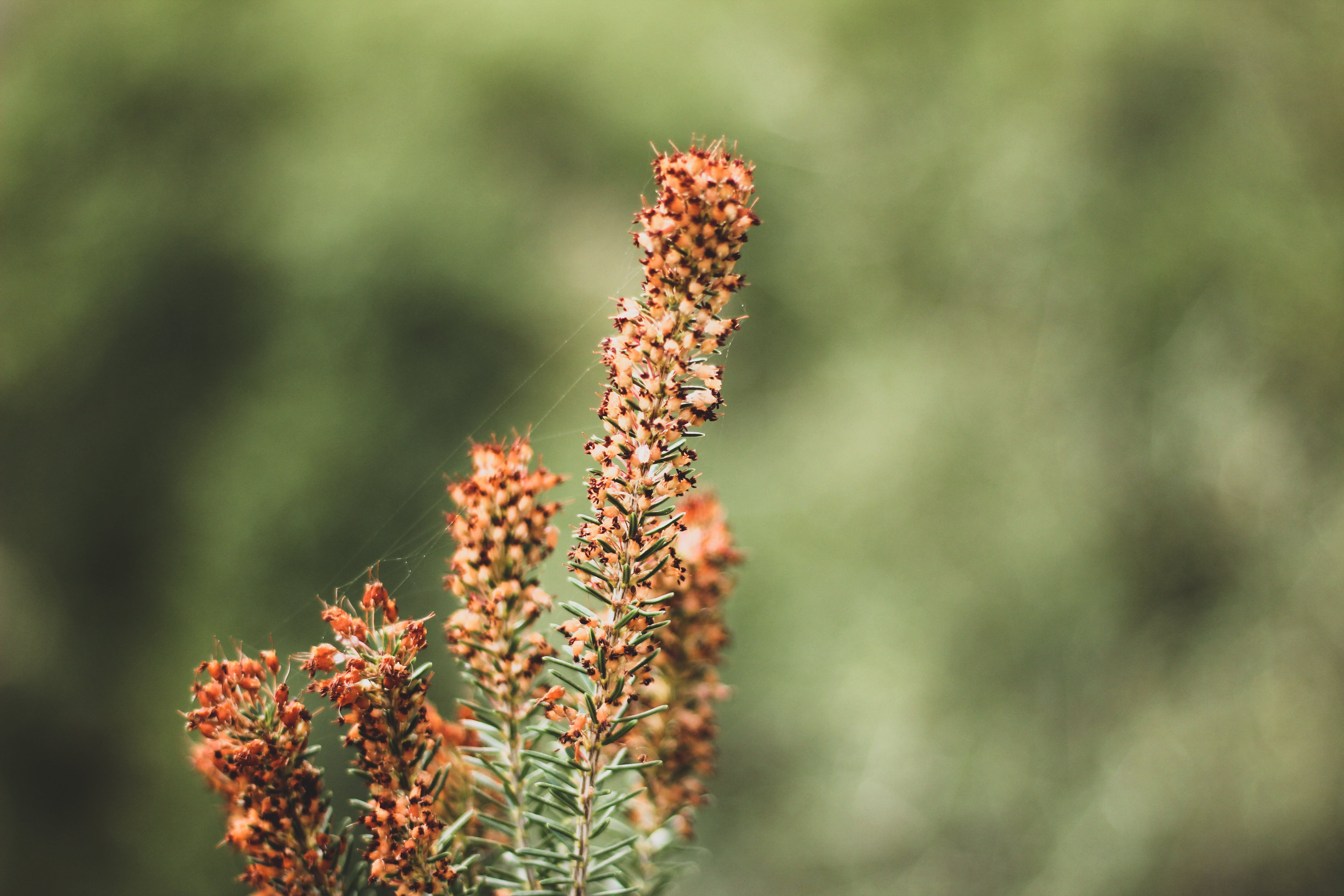Macro Photography of Brown Flowers