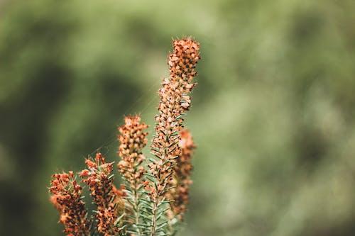 Základová fotografie zdarma na téma divoký, flóra, hloubka ostrosti, jasný