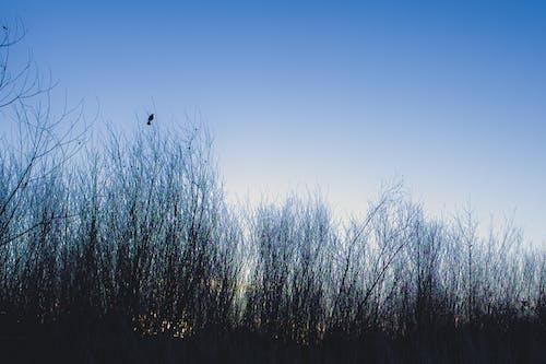 Black Bird Flying over Leafless Trees