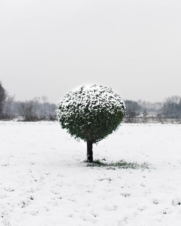 กลางวัน, ขาว, ต้นไม้