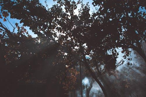 Бесплатное стоковое фото с ветви, деревья, дымка, лес