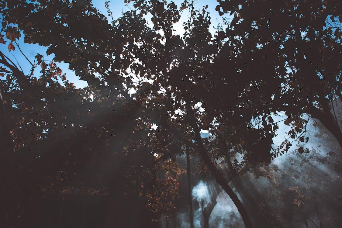 alam, cabang, fotografi sudut rendah