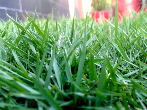 Free stock photo of grass land