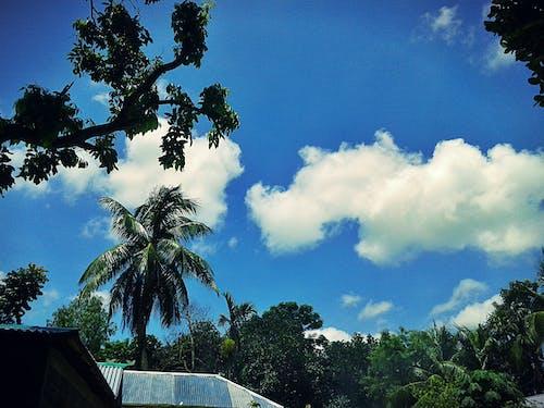 Δωρεάν στοκ φωτογραφιών με γαλάζιος ουρανός, δασικός, δέντρα, δέντρα καρύδας