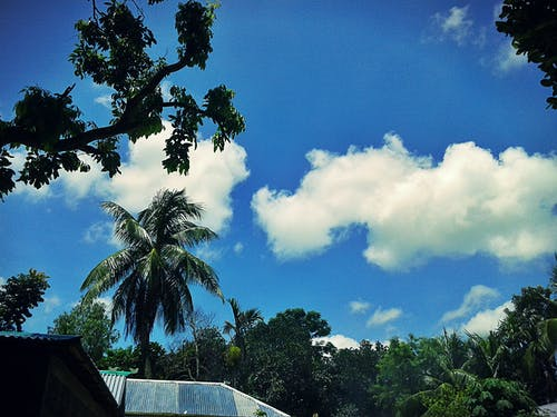 Foto stok gratis alam, atap, awan, cabang pohon