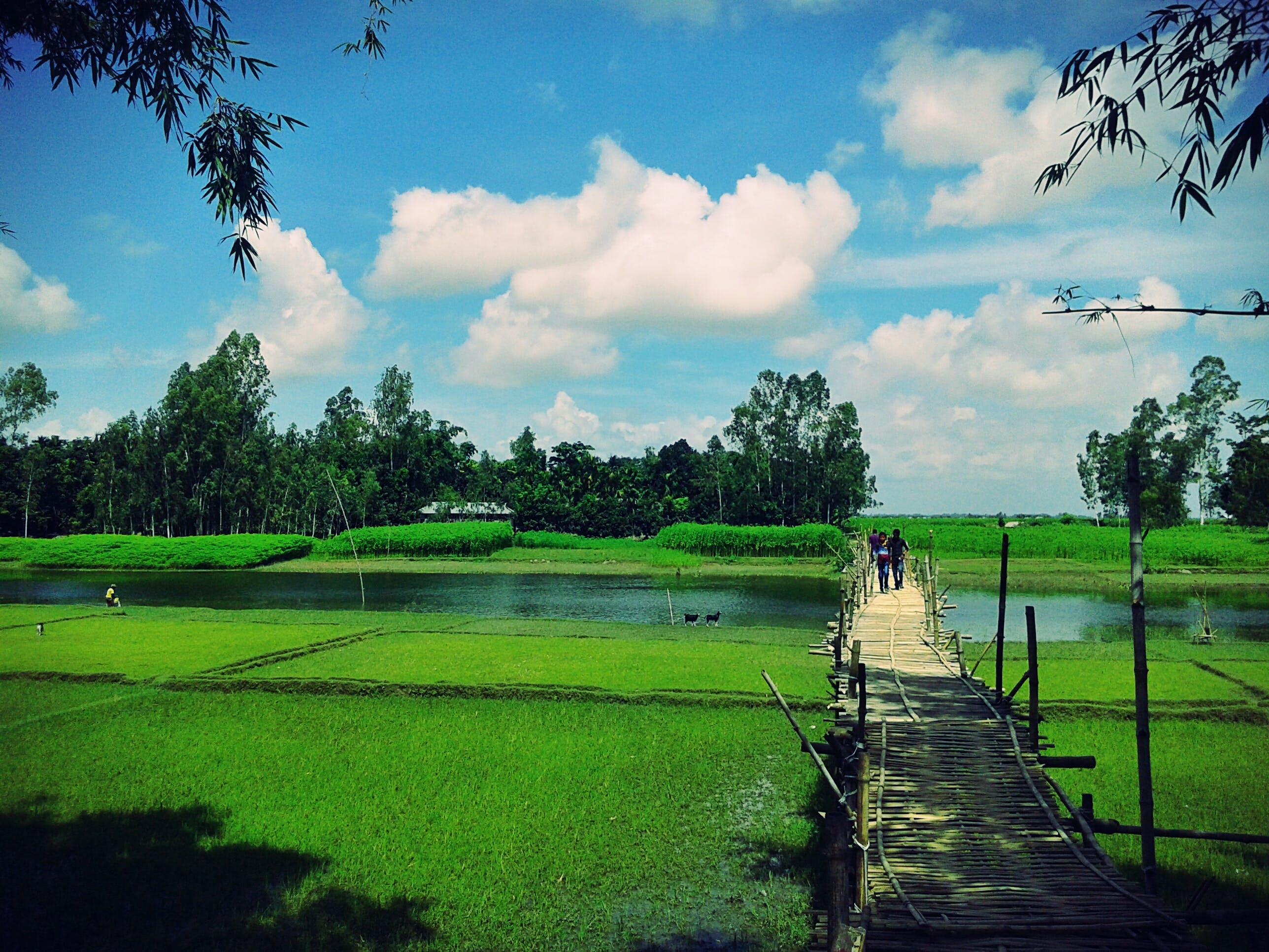 Scenic View of the Farm