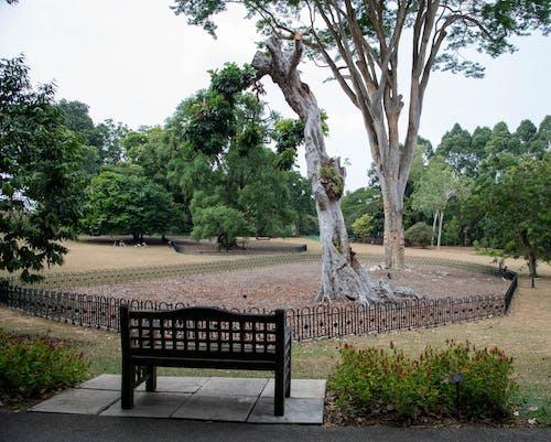Free stock photo of botanical garden, inner peace, peaceful