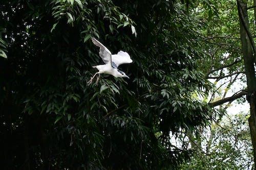 Free stock photo of bird flying