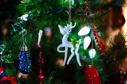 Foto profissional grátis de abeto, acessório, árvore de Natal, baile