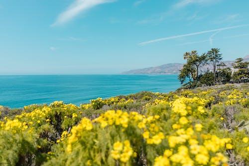 Yellow Flower Field Near Sea Under Blue Sky