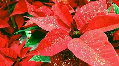 工厂, 灰塵, 紅色, 红色的叶子 的 免费素材照片