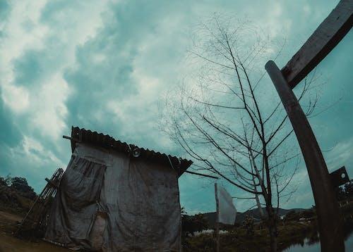 Foto d'estoc gratuïta de aigua, arbre, arquitectura, cel