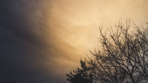คลังภาพถ่ายฟรี ของ กลางแจ้ง, การถ่ายภาพมุมต่ำ, ซิลูเอตต์, ต้นไม้