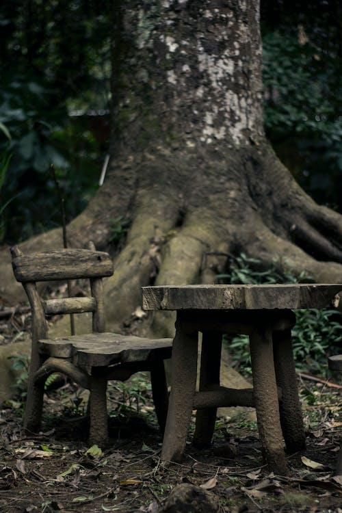 Fotos de stock gratuitas de árbol, arboles, bosque, fauna