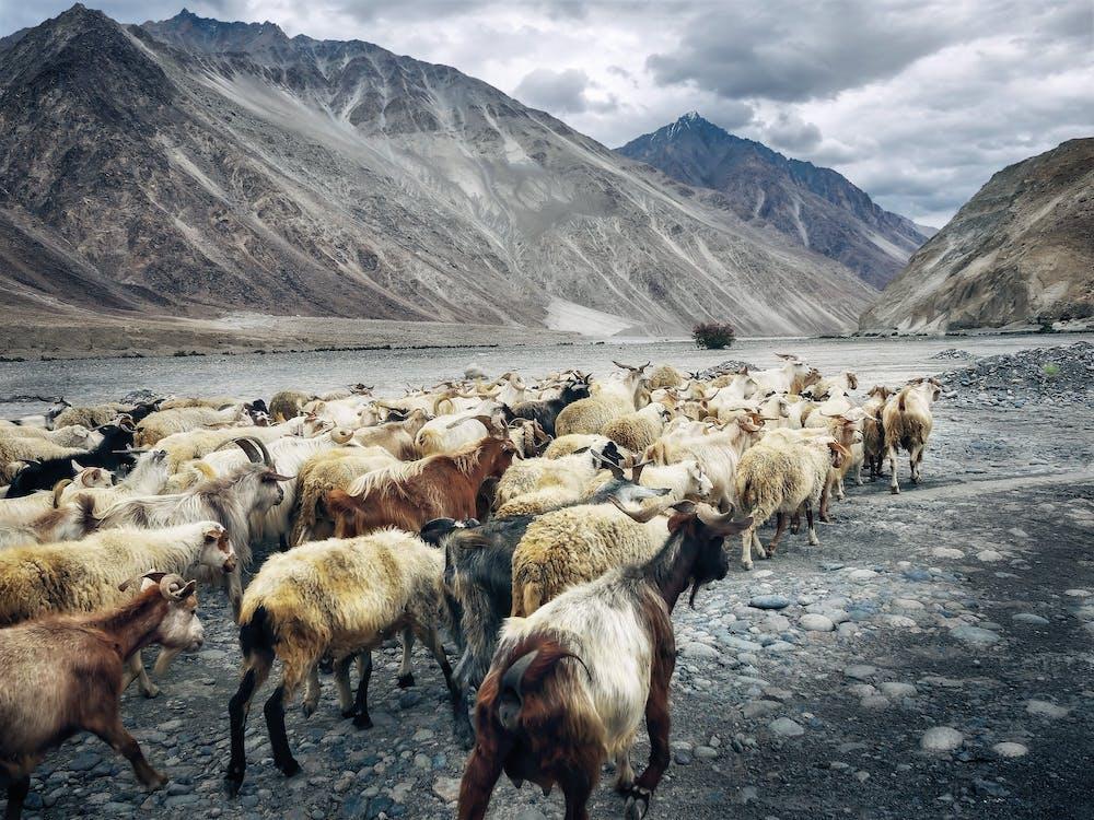 animale de fermă, animale domestice, apă curgătoare