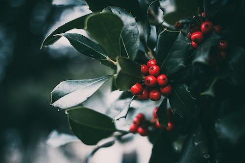 Round Red Fruit Photo