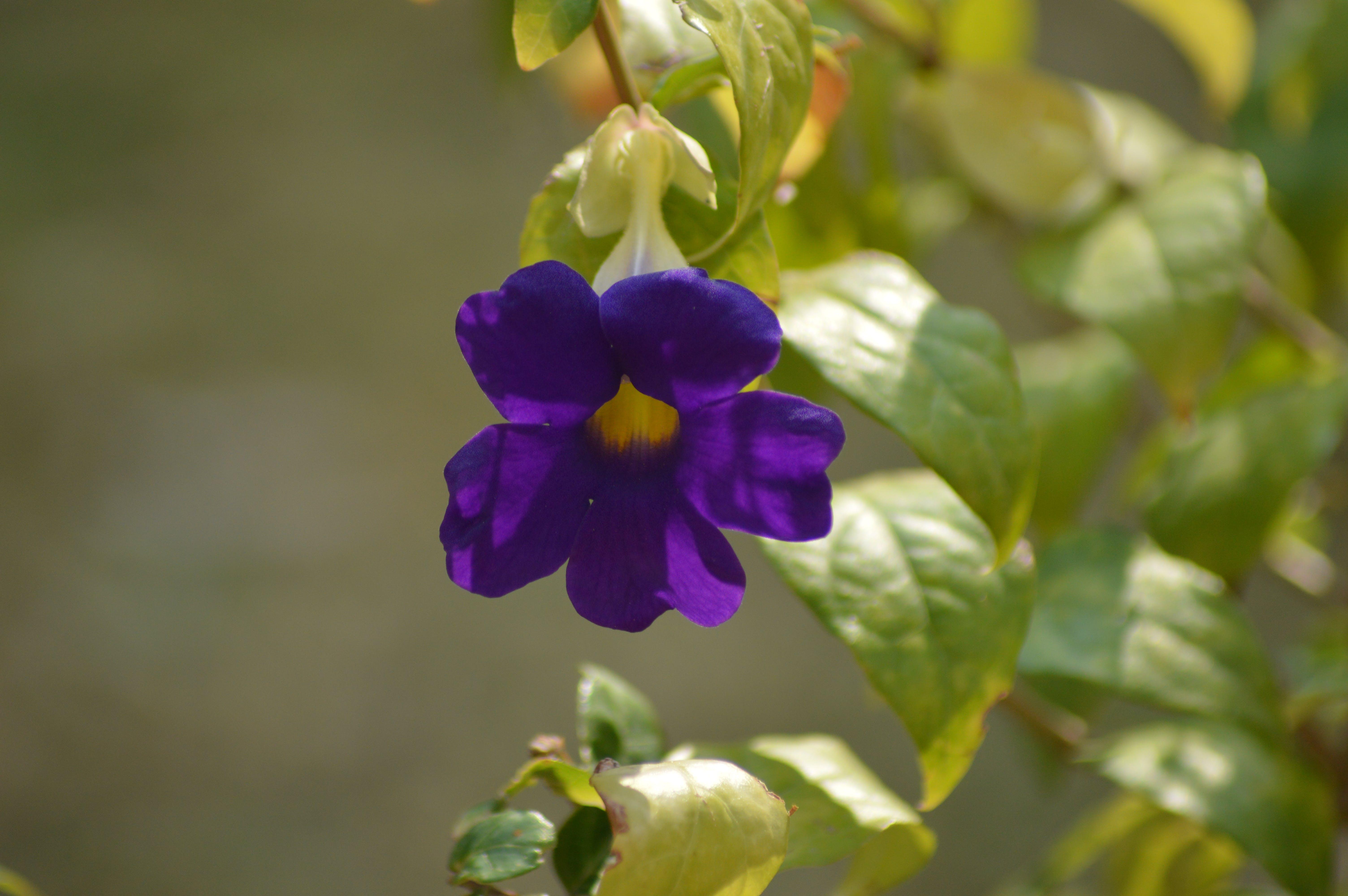 Free stock photo of flower, blue flowers, green flower