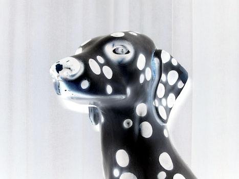 Free stock photo of dog, detail, dalmatian, theme weird