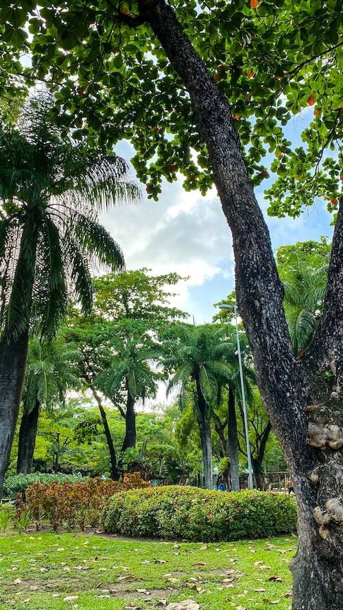 açık hava, ağaç, ağaç gövdesi içeren Ücretsiz stok fotoğraf