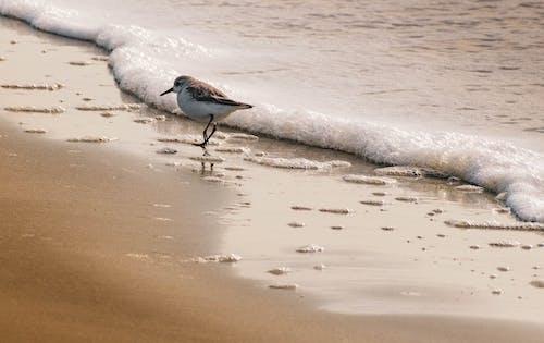 White and Brown Bird on Beach