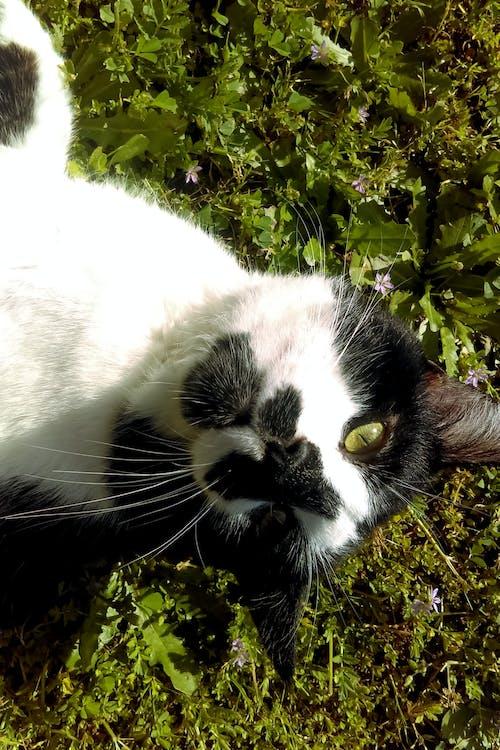 Základová fotografie zdarma na téma fotografie, fotografování zvířat, kočky, kontrast