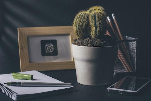 Green Cactus on White Ceramic Flower Pot