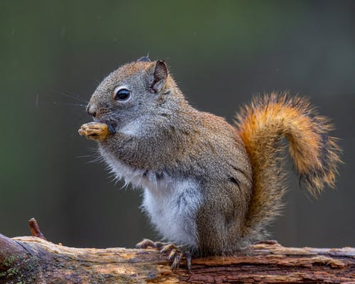 Photos gratuites de adorable, aliments, animal