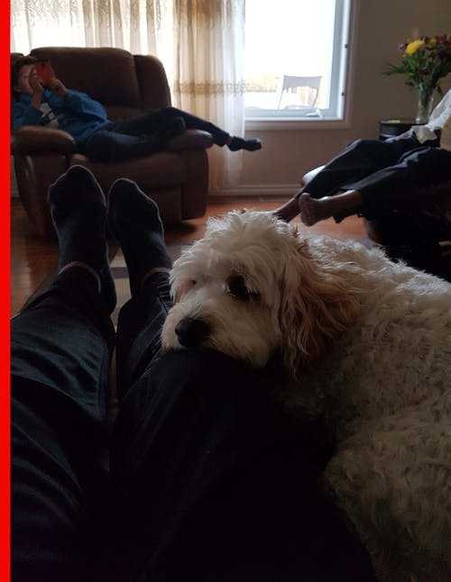 Free stock photo of Calm dog on lap, Dog Resting