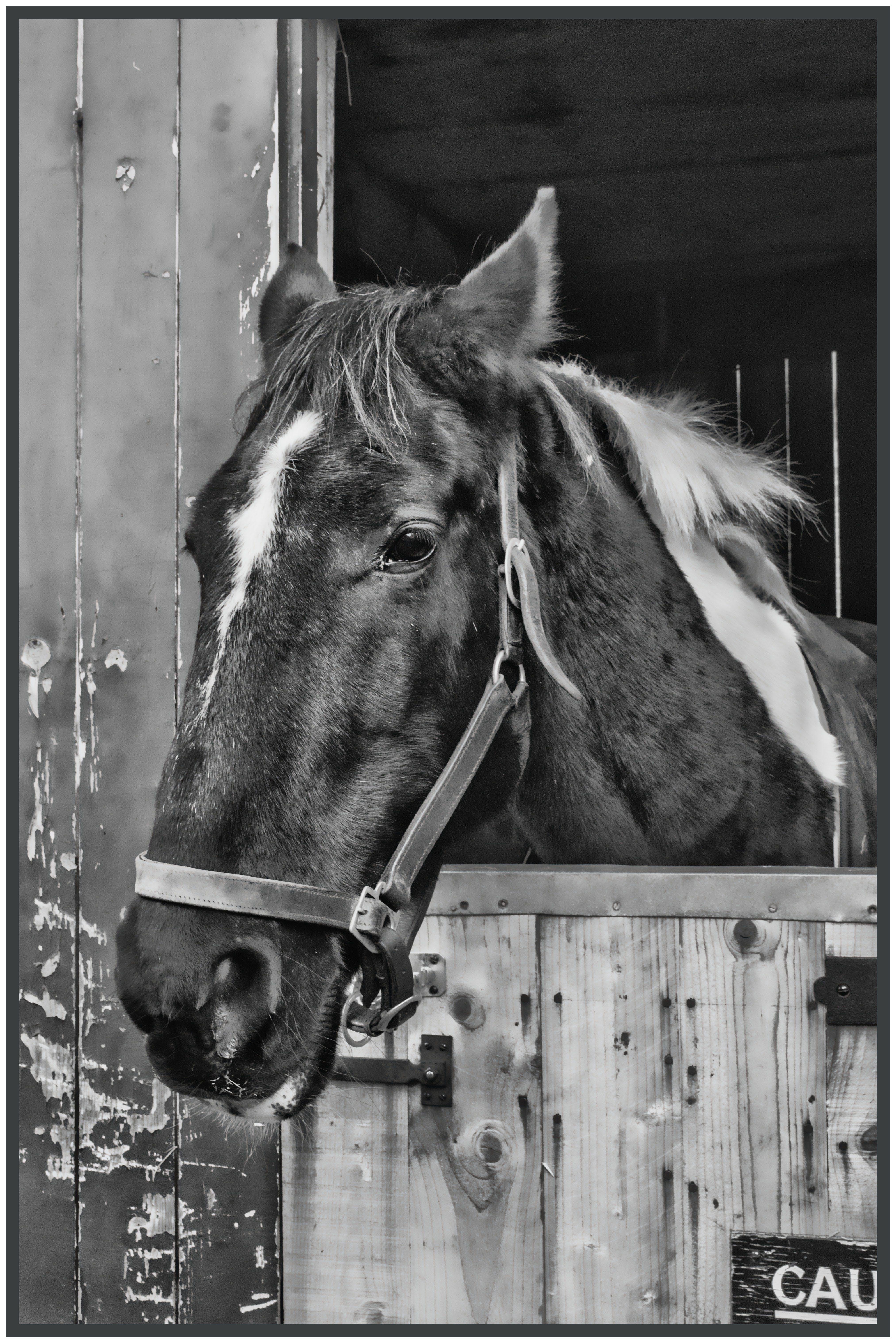 고삐, 마개, 마구간, 말의 무료 스톡 사진