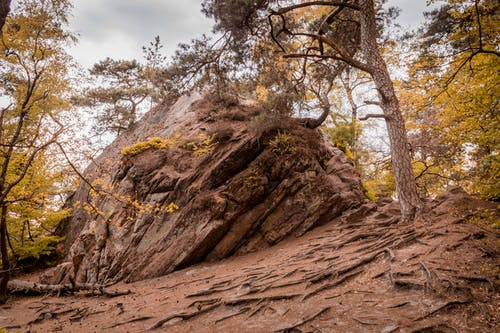 Free stock photo of colors of autumn, conifer, hdr, Mossy rocks