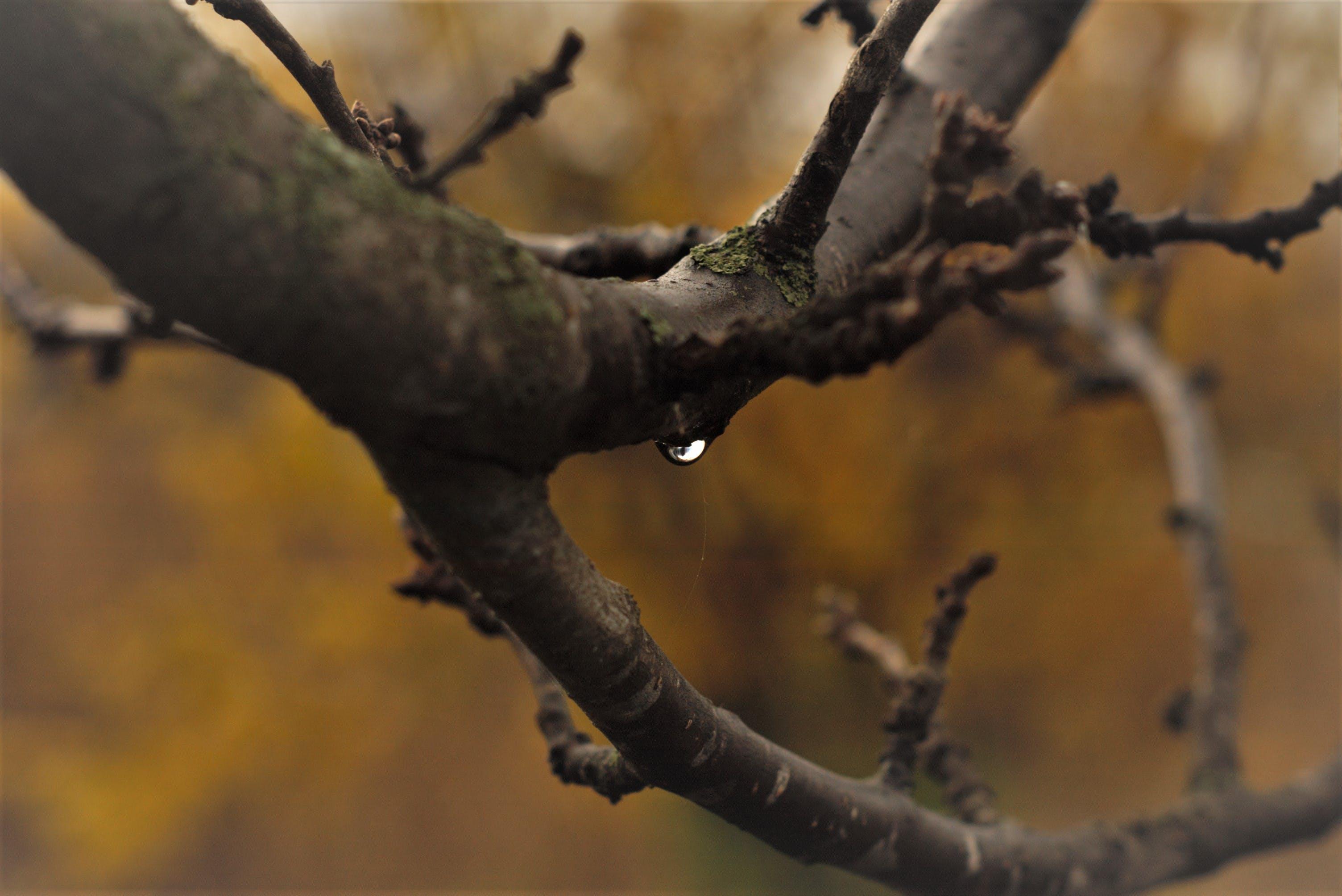 Kostnadsfri bild av fokus, grenar, liten droppe, miljö