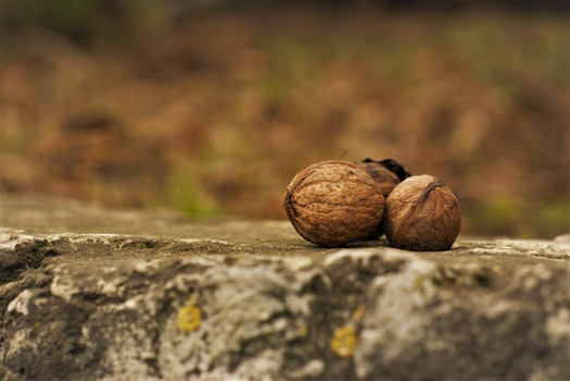 Close-Up Photography of Nuts on Ground