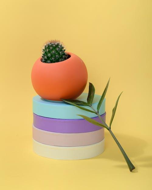Photo of Cactus Plant on Orange Ball-Shaped Pot