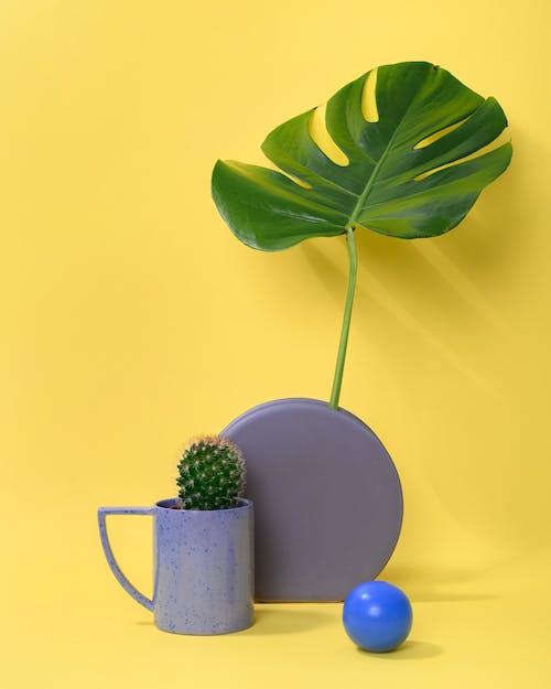 Photo of Cactus Plant on Purple Mug