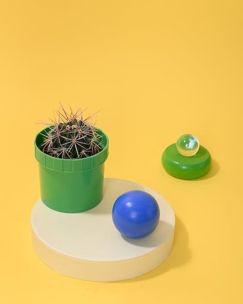 Free stock photo of botanical, cactaceae, cacti