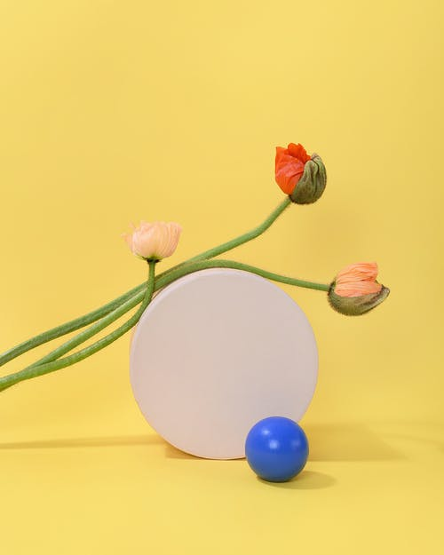Photo of Poppy Flowers Leaning on White Table
