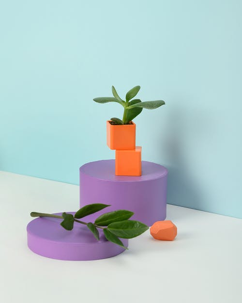 Photo of Succulent Plant on Orange Container