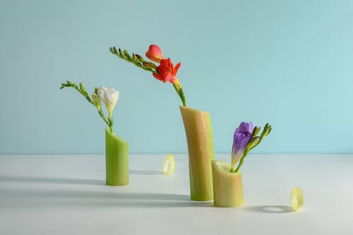 Photo of Flowers on Green Stems
