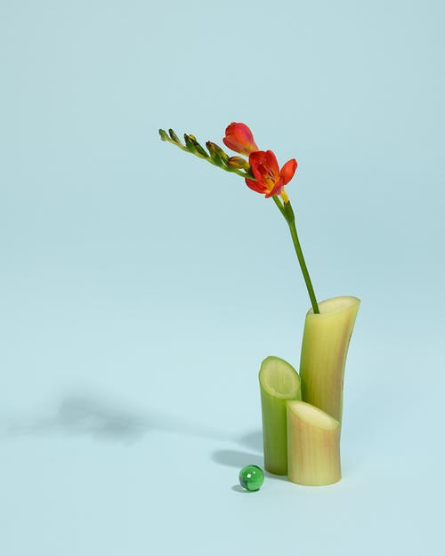 Photo of Red Flower on Green Vase