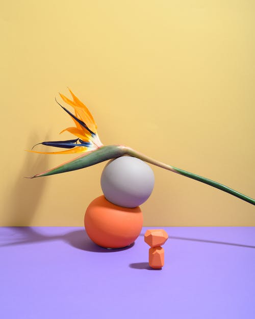 Free stock photo of art, beautiful, bird
