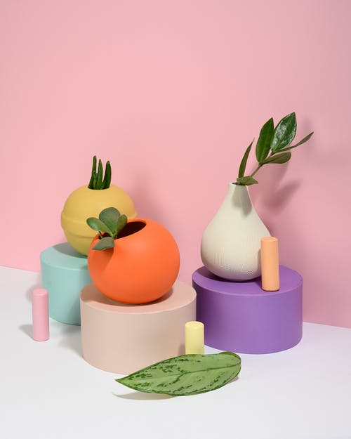 Photo of Succulent Plants on Top of Small Round Tables