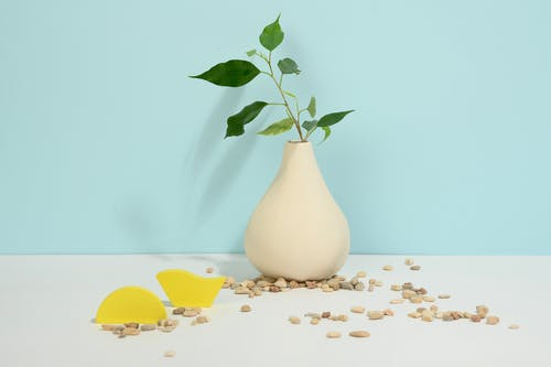 Photo of Green Leaves on White Vase