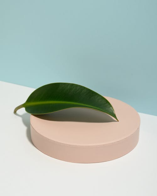 Close-Up Photo of Green Leaf on Top of Round Object
