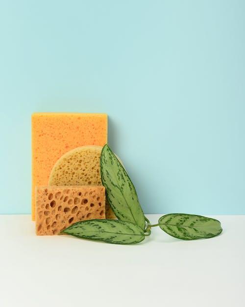 Photo of Leaves Beside Sponge
