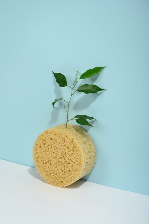 Photo Of Leaves On Sponge