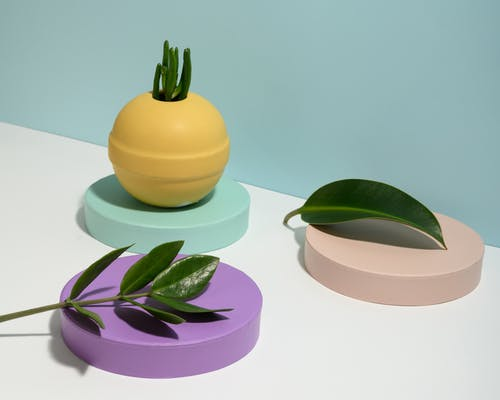 Photo of Plants on Top of Round Objects