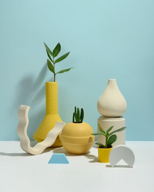 Безкоштовне стокове фото на тему «crassulaceae, ботанічний, ваза»