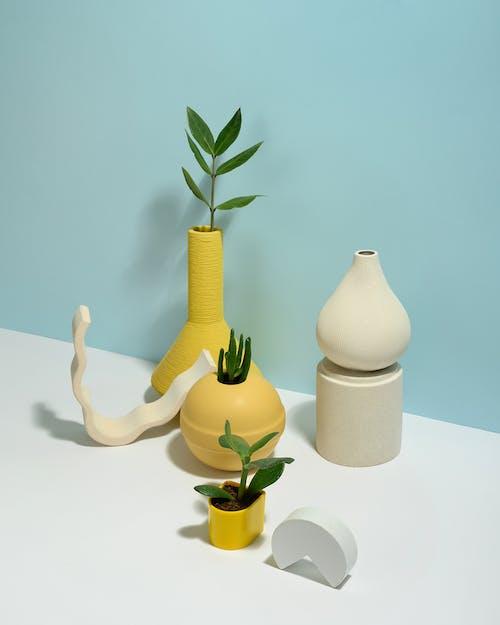 Photo of Succulent Plants on Yellow Pots