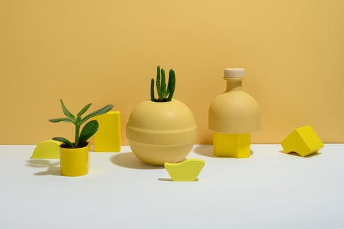 Photo of Succulent Plants on Yellow Background